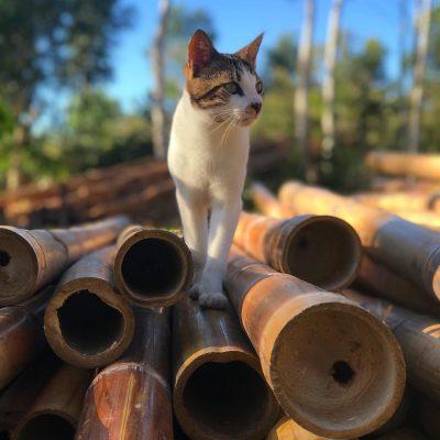 bambou-ecosite ioniala