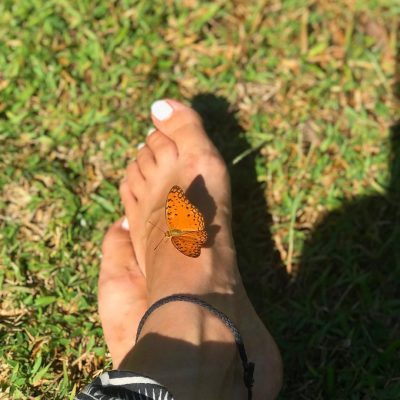papillon-ecosite ioniala